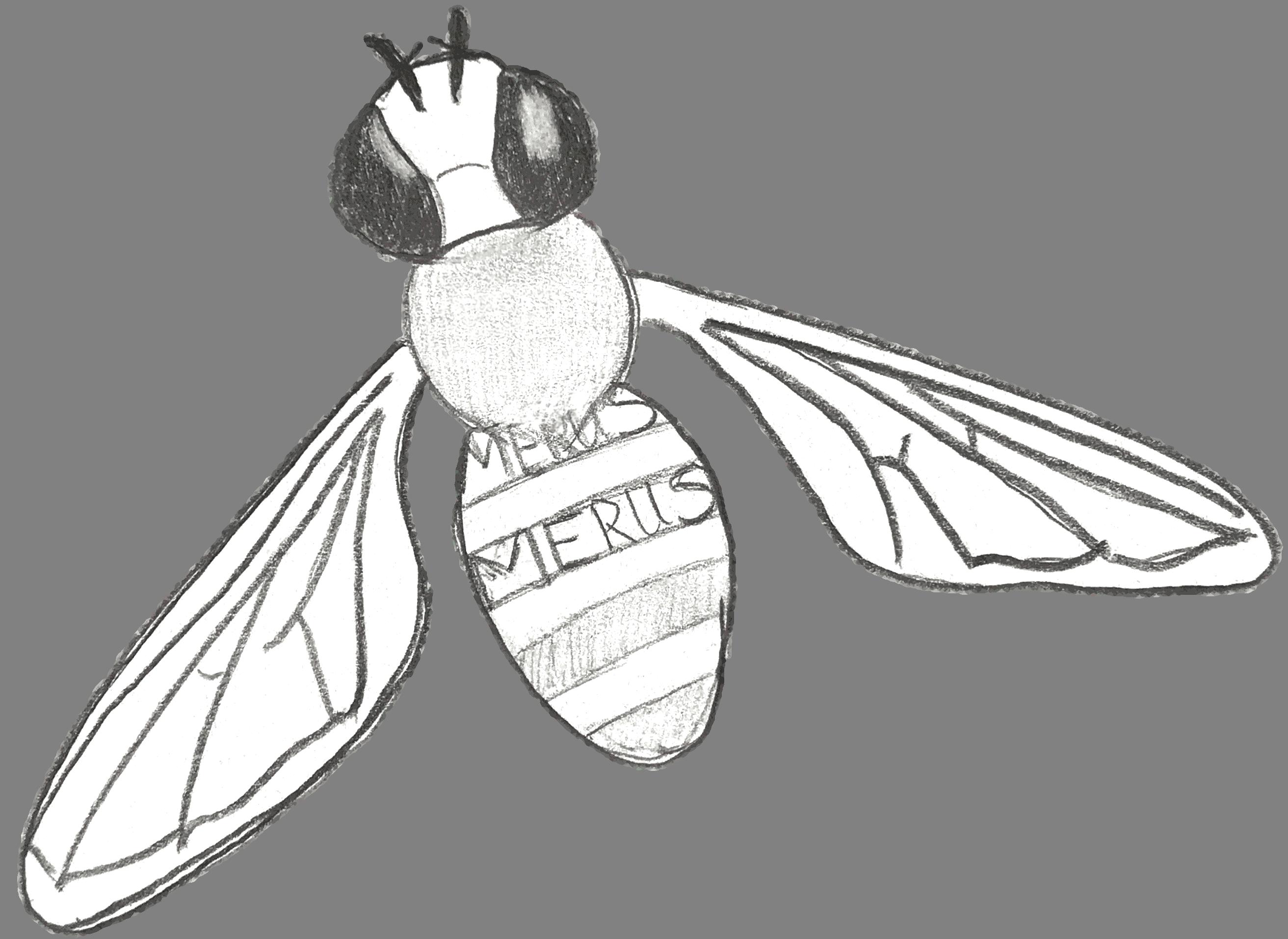 Merus saving Bees