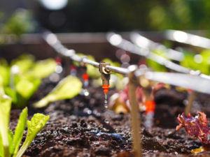 drip irrigation reduces water consumption